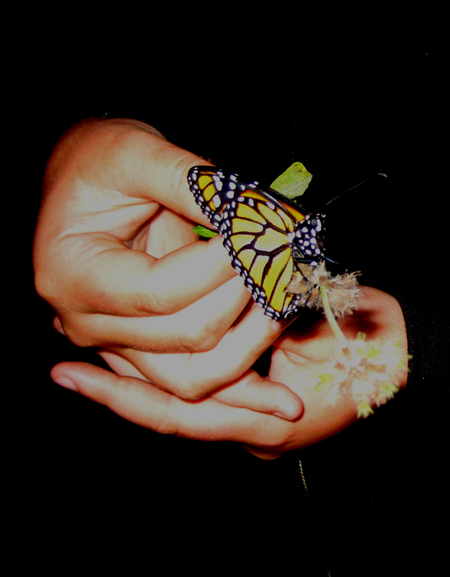 Hands Hold Butterfly